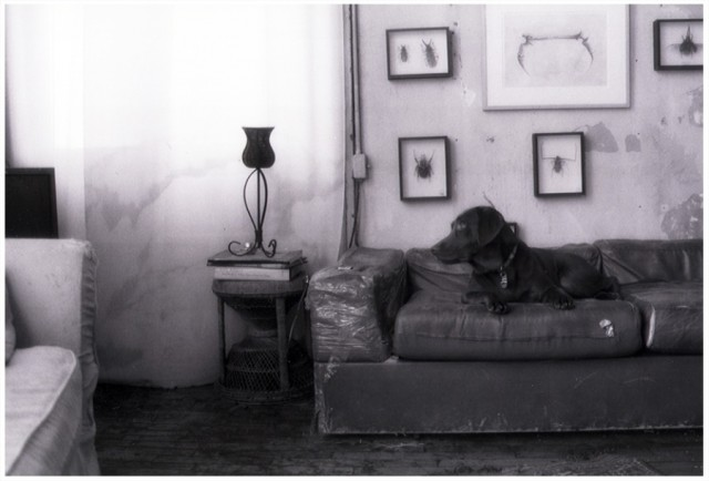 Lola - b.2002 d.2003 Bond St Loft - New York 2003